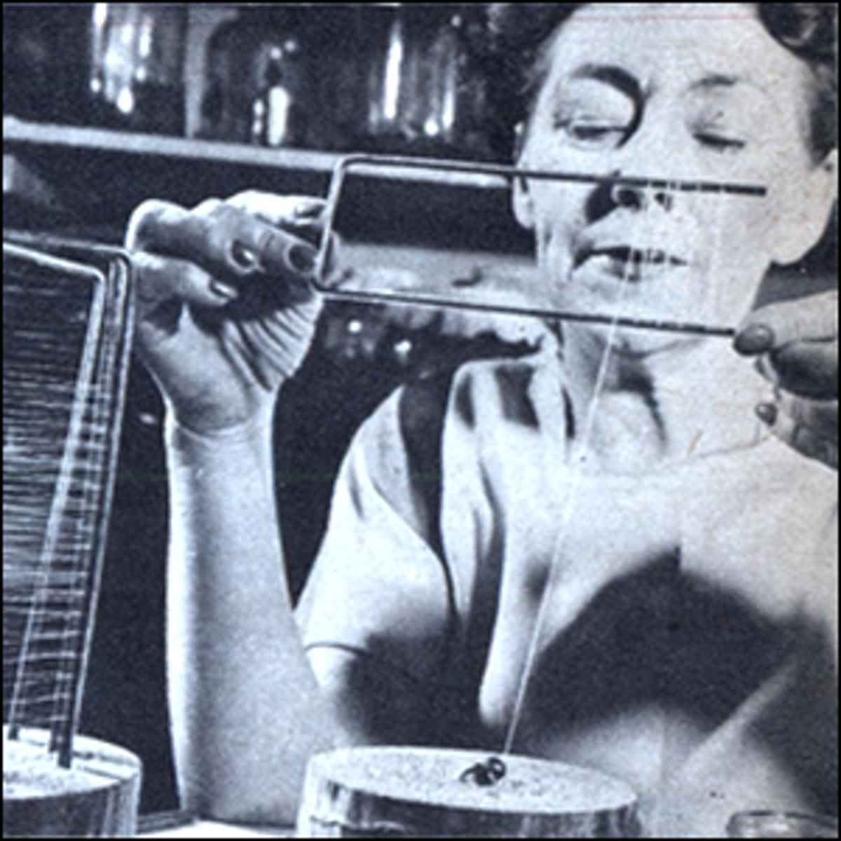 Nan Songer, an amateur entomologist who made a name for herself producing large quantities of spider silk during World War II.