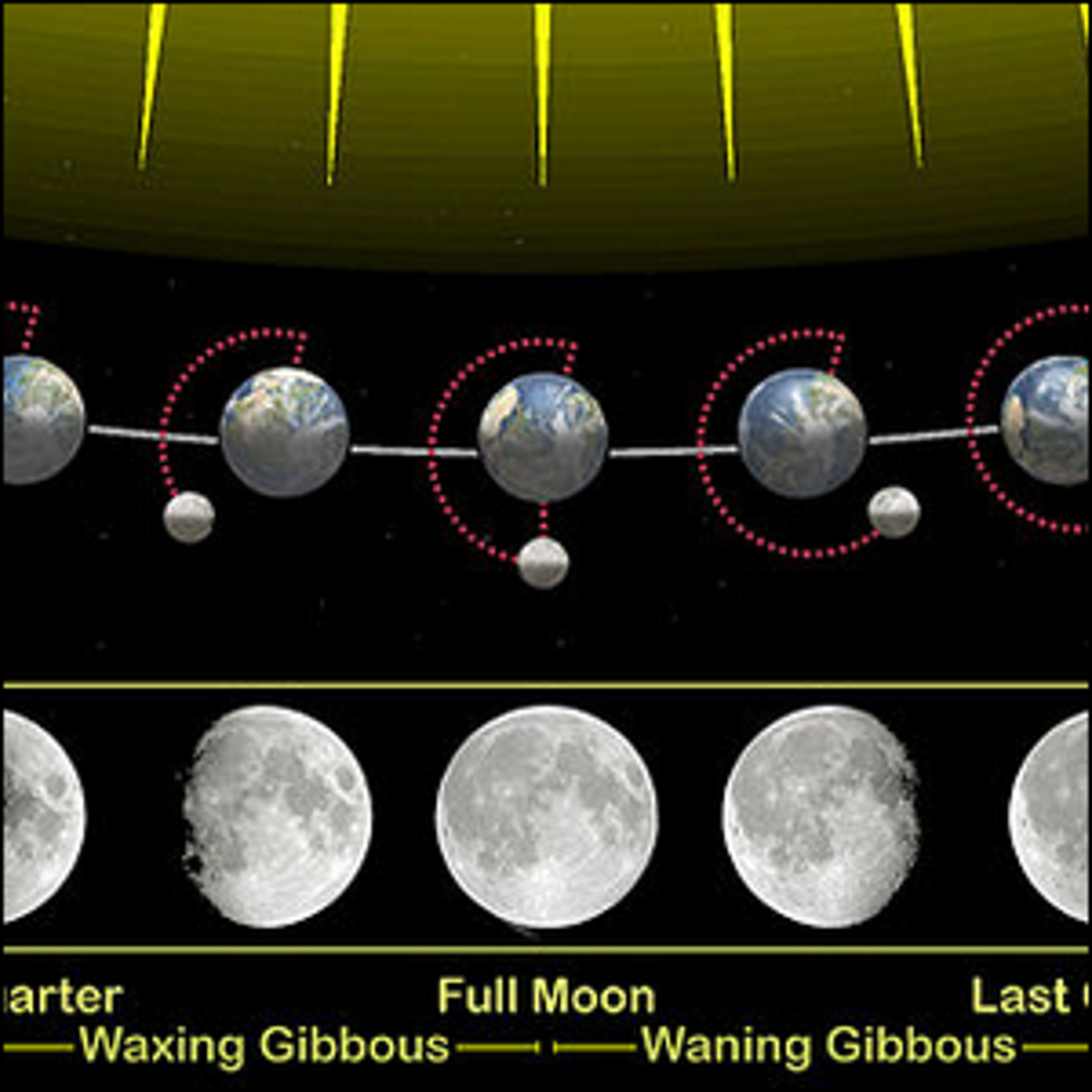 A moon cycle chart depicting the phases of the Moon.