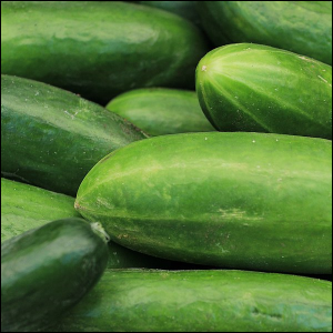 Cucumbers being sold at a market.