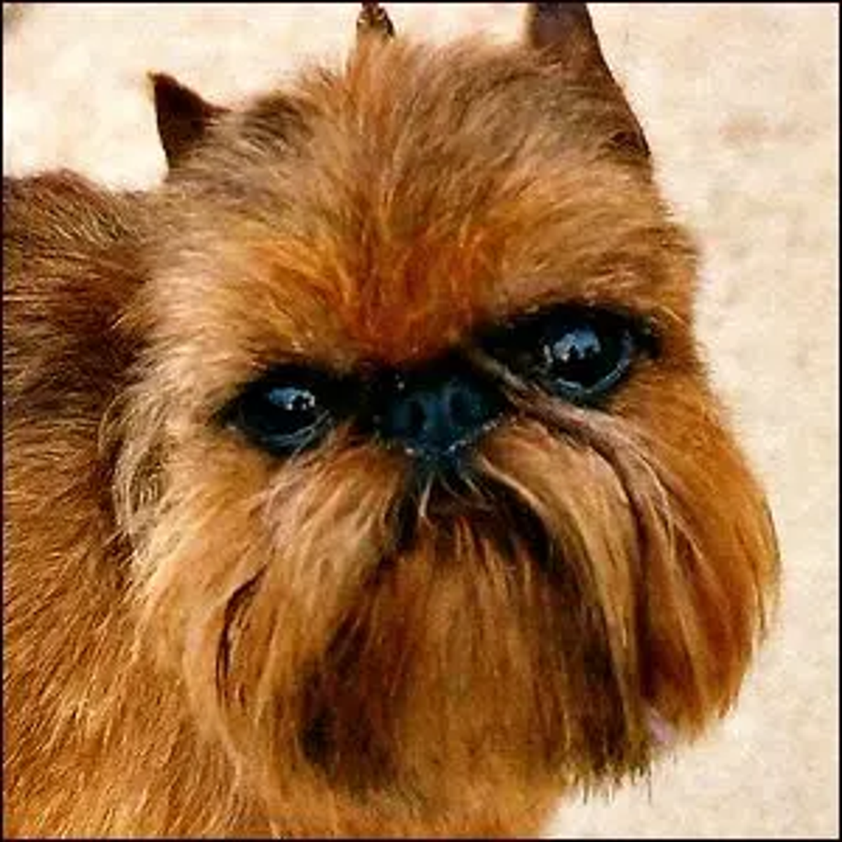 A brown Griffon Bruxellois with beard and cropped ears.