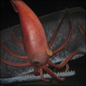 A dramatization of an underwater encounter between a sperm whale and giant squid.