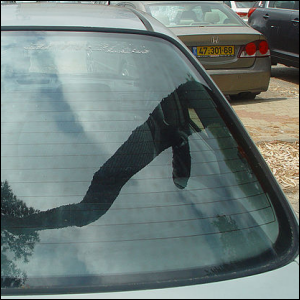 Photo of a car's tempered glass rear windshield.