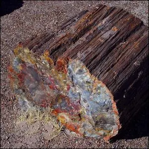 One of the petrified logs at Petrified Forest National Park, Arizona.