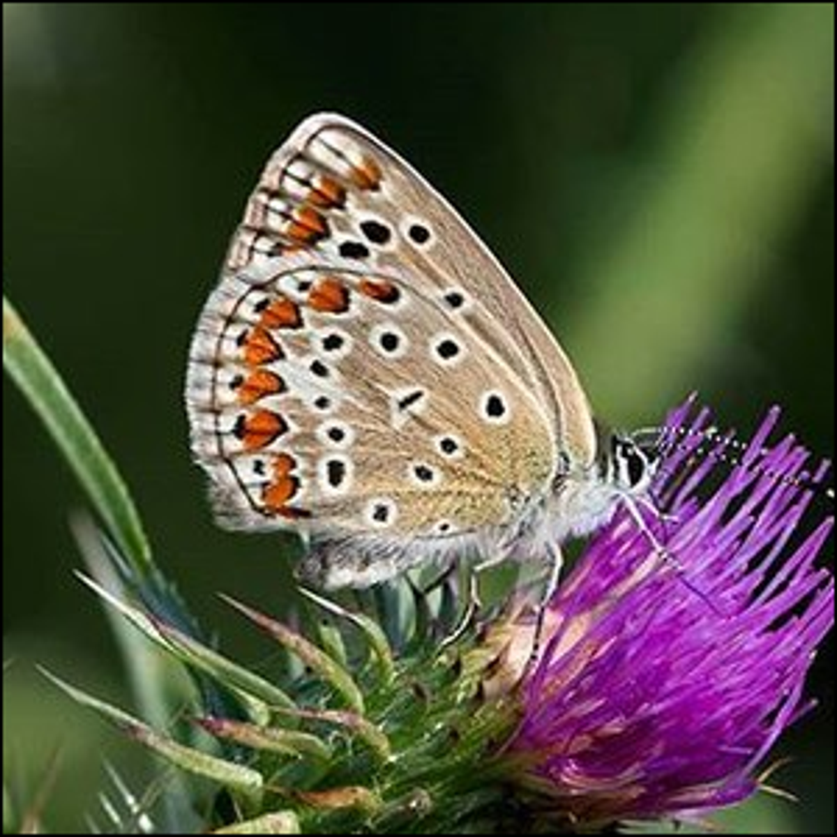 A small butterfly sitting on a green and purple flower.