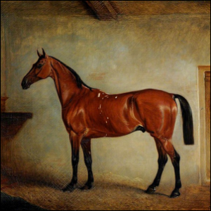 Artwork of a Bay Horse in a stable.