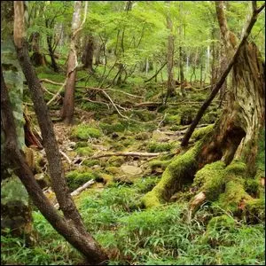 A forest located in hilly terrain.