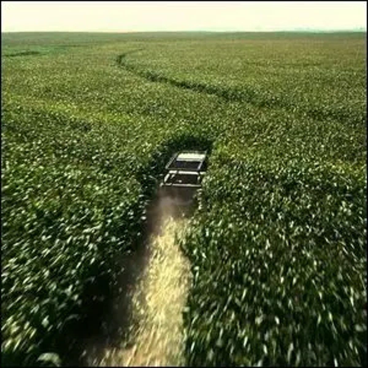 A farm vehicle driving through a field of corn in the movie Interstellar.