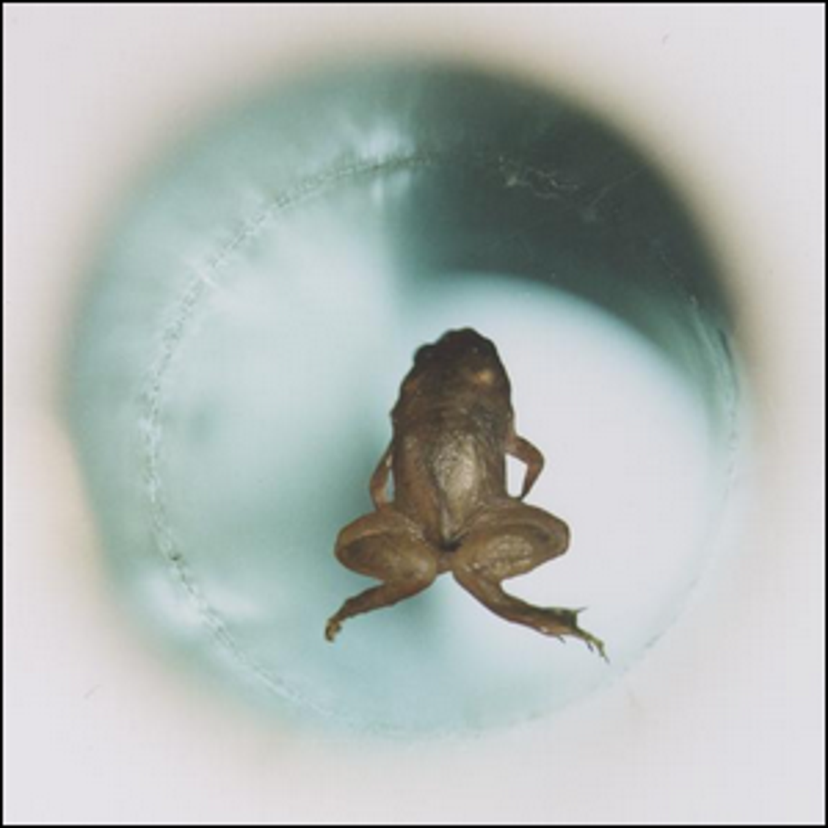 A live frog levitating inside the vertical bore of a Bitter solenoid in a magnetic field.