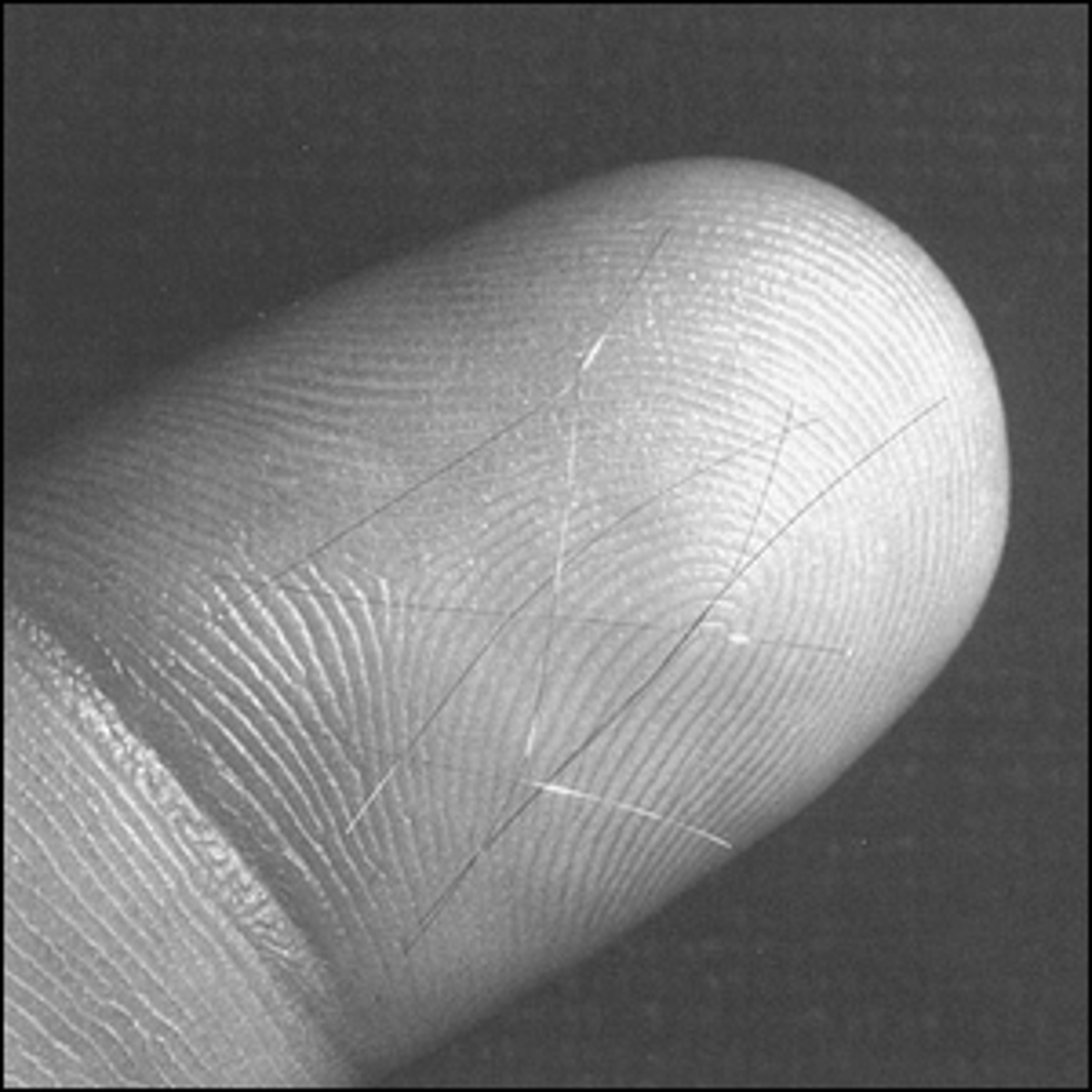A photo showing the size of the tiny copper needles that were launched into space versus a human finger.