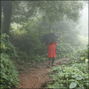 A person walking through a rainy and misty forest with an umbrella.