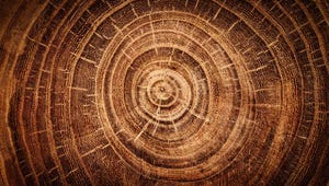 What Tree Rings Tell Us Besides Age