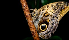 What's the Difference Between Butterflies and Moths?