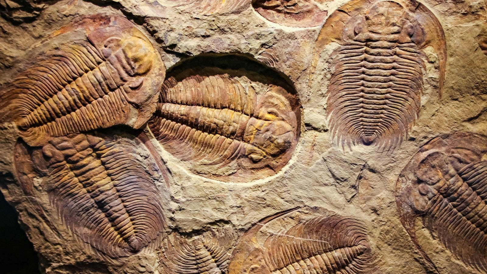 What is a Fossil and Where Can You Find Some?