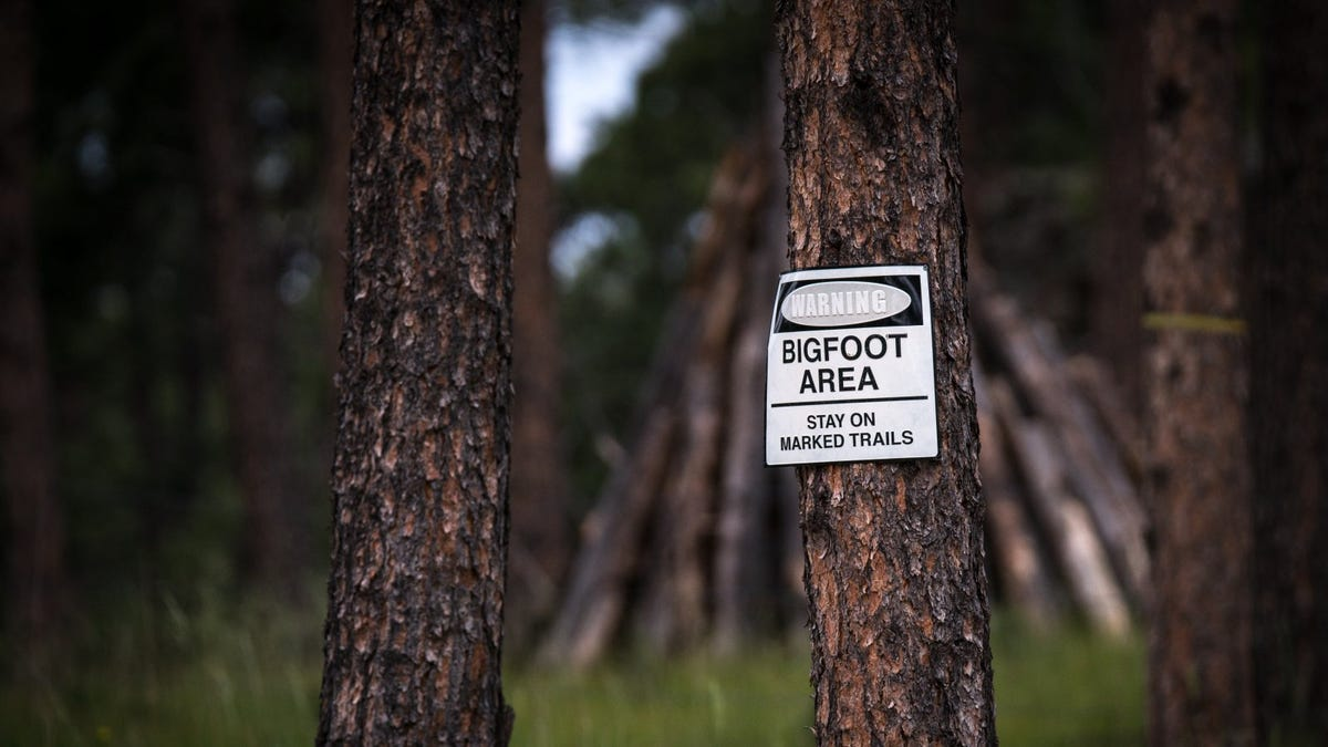 Bigfoot area warning sign on tree in forest