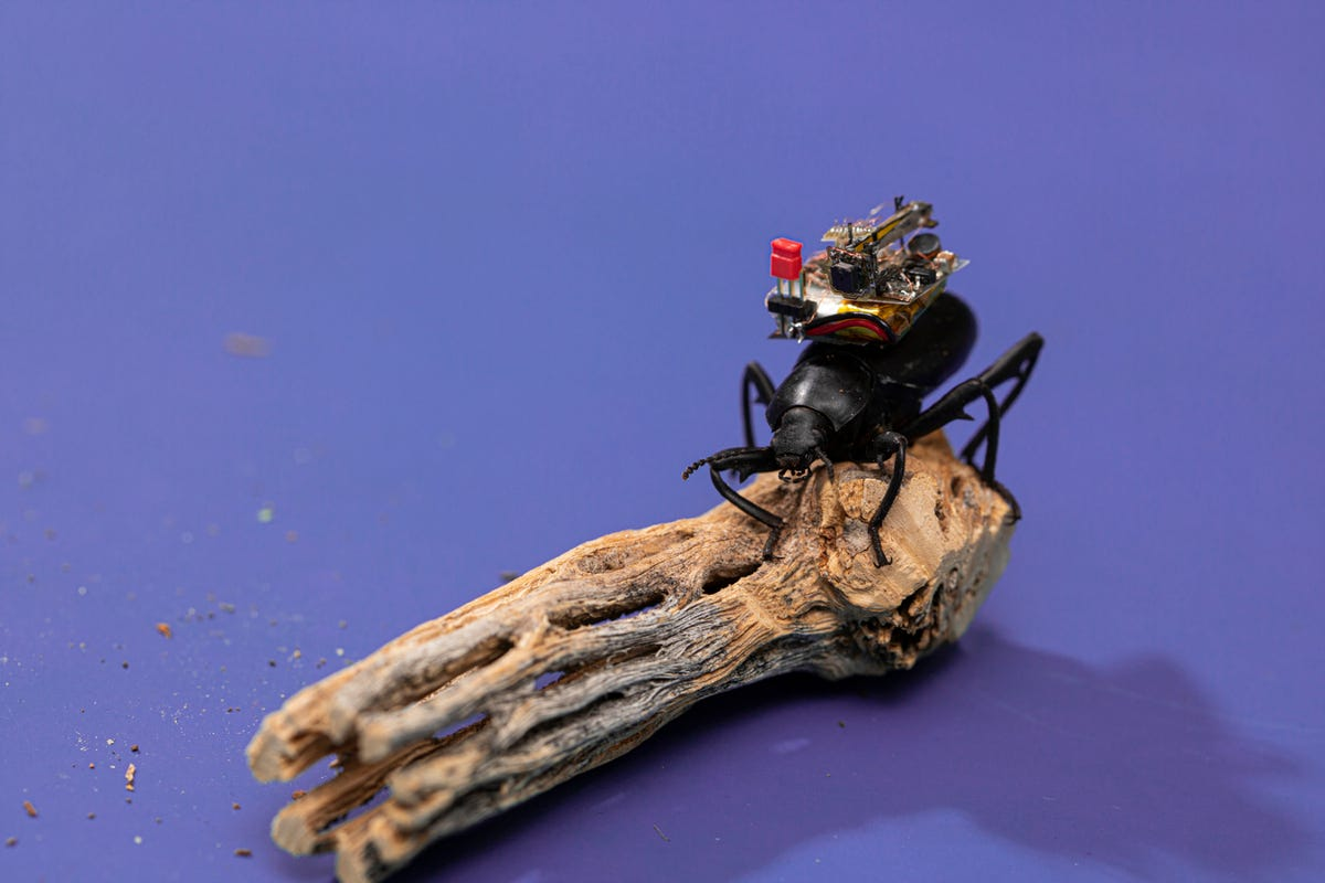 Beetle on log with camera