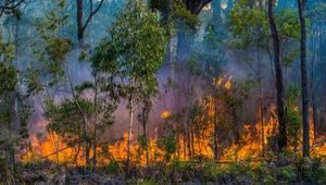 Why Do We Use Controlled Fires in Forests?