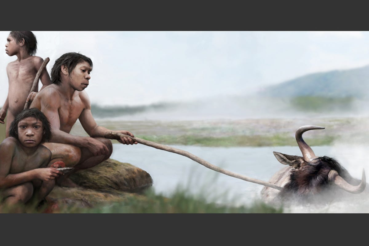 Illustration of hominids poking wildebeest in hot water with a stick