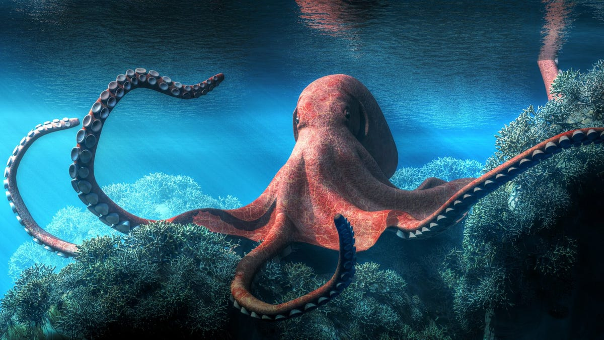 illustration of octopus among brown coral in ocean shallow