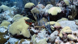 Using the Ocean to Cool Itself and Save Corals