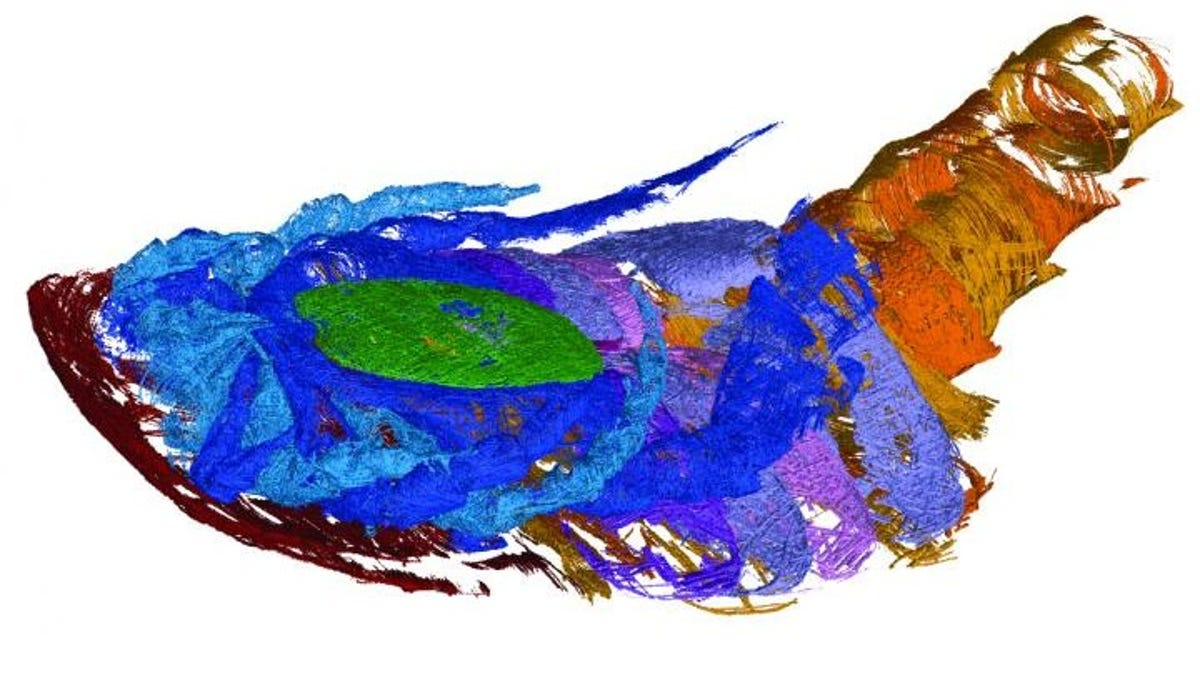 Colorful CT scan of a sea scorpion