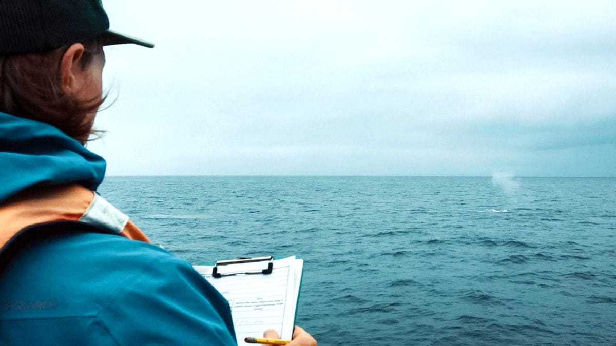 Man with clipboard on boat looking at spray at sea