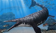 Ancient Big-Snouted Marine Reptile Discovered