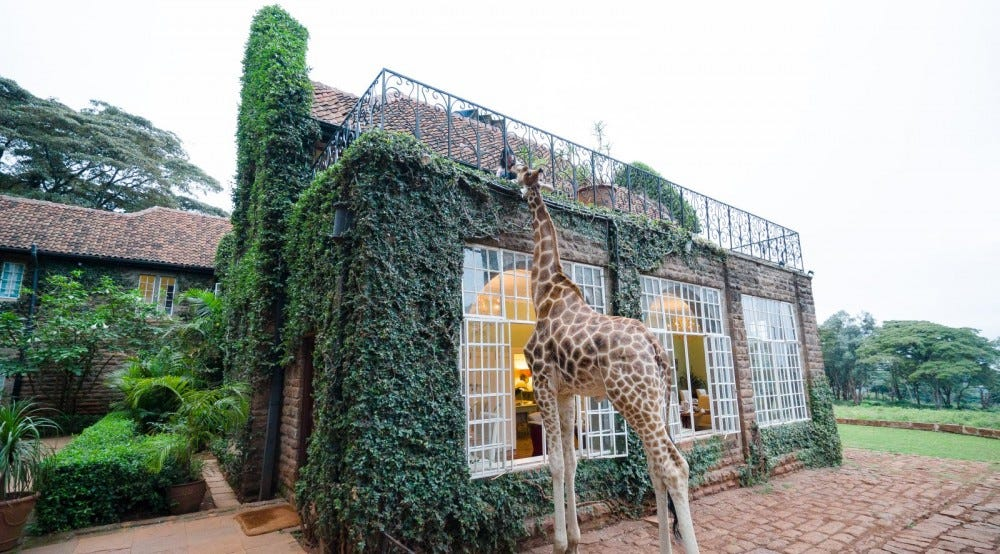 Giraffe Manor at Nairobi Kenya