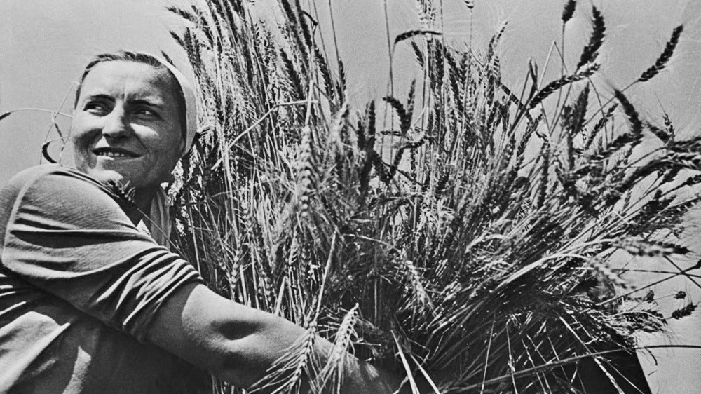 Woman collective farmer with newly harvested wheat. Ca. 1935-40