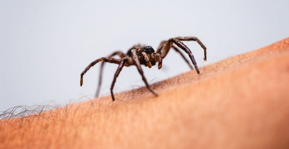 spider crawling on man's arm