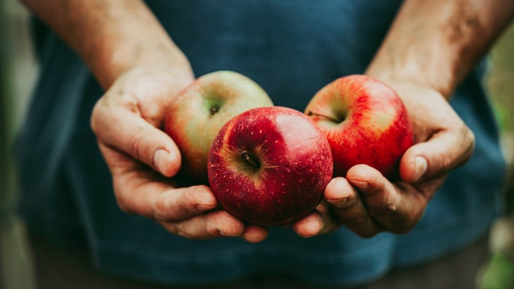 Farmers hands with freshly harvested apples
