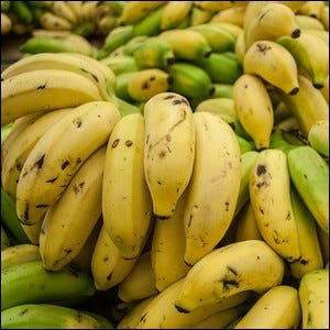 A pile of ripe and unripened Cavendish bananas.