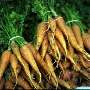 Bundles of picked carrots for sale at a farmer's market.