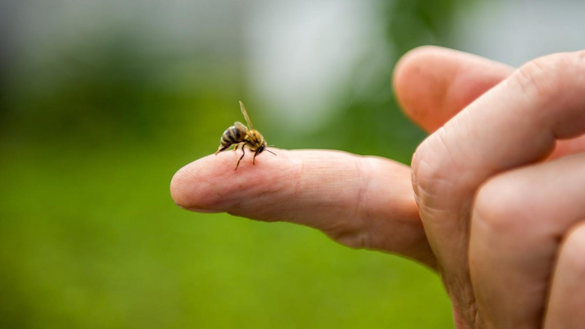 a bee stinging a person on the finger