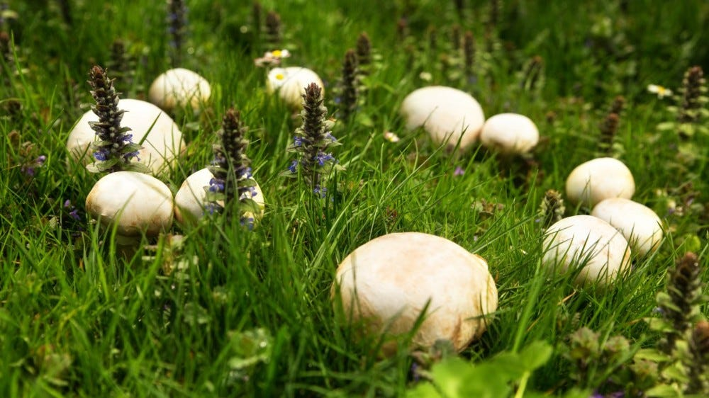 a fairy ring in a meadow with flowers