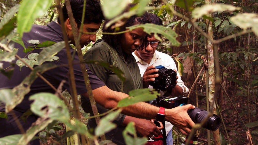 Men in jungle with cameras