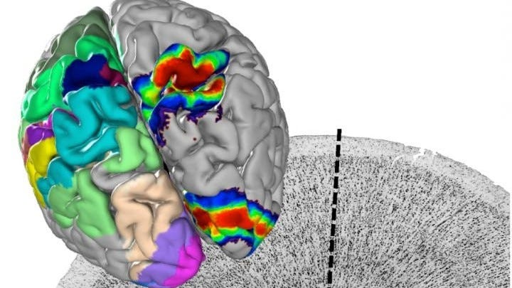 Digitized view of the brain