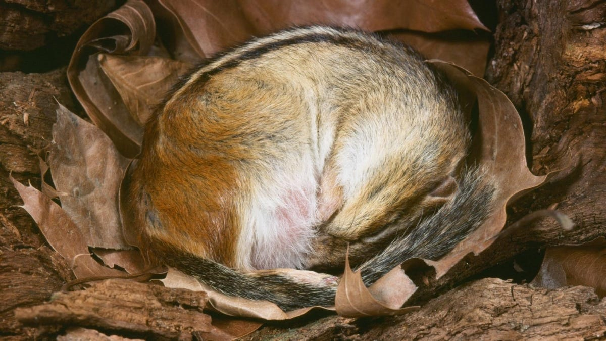 what does hibernate mean for animals
