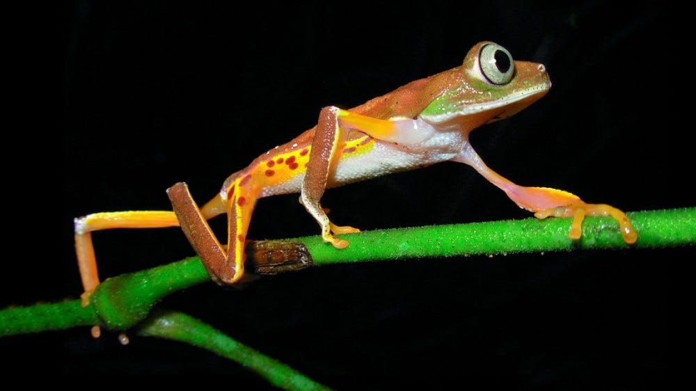 Frog on green branch