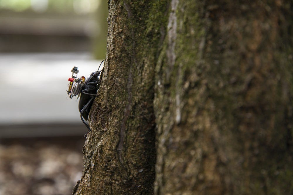 Beetle with camera climbing tree