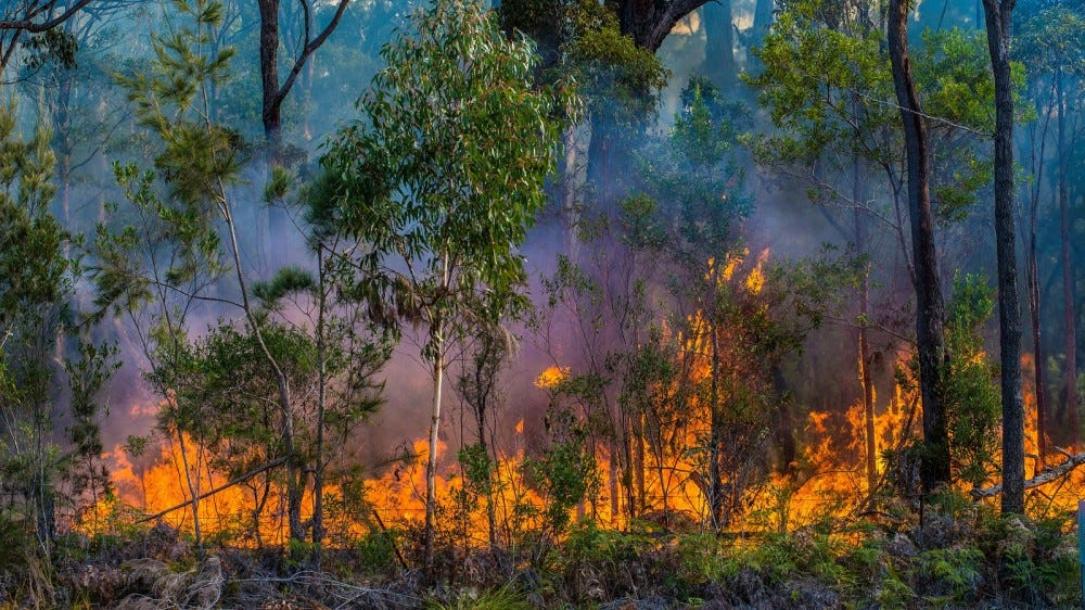 controlled fire burning in a forest
